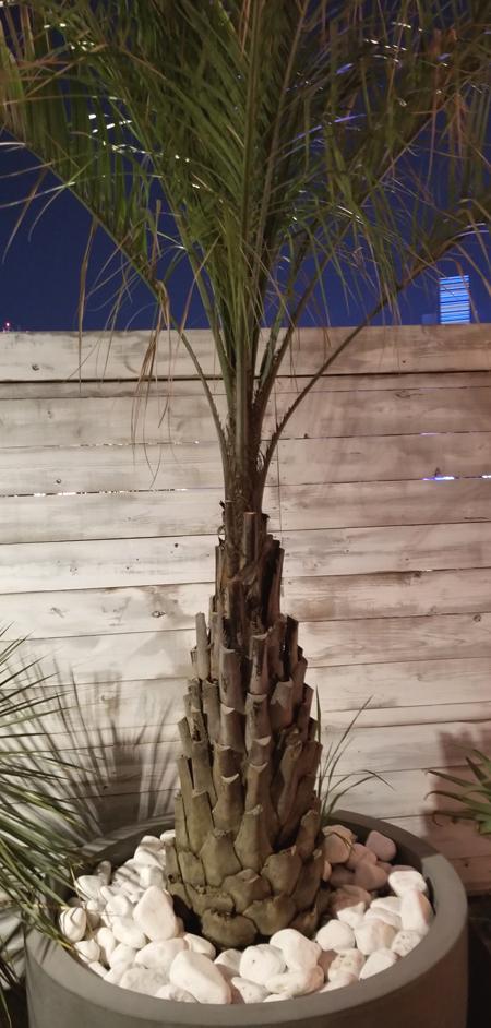 ワイルドビーチ植木1
