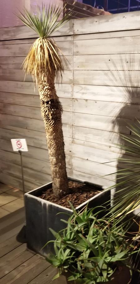 ワイルドビーチ植木2